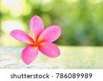 beautiful wet pink  tropical... | Shutterstock . vector #786089989