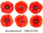 Red Poppy Flower Collection...