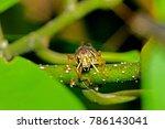 grasshopper on leaf | Shutterstock . vector #786143041