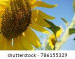 cosmos flowers field | Shutterstock . vector #786155329