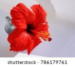red flower in white background... | Shutterstock . vector #786179761