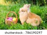 rabbit on green grass in spring | Shutterstock . vector #786190297