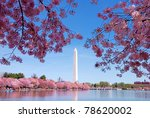 Washington Dc Cherry Blossom...
