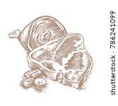 drawing of pork steak  leg and... | Shutterstock .eps vector #786241099