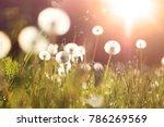 fluffy dandelions glow in the... | Shutterstock . vector #786269569
