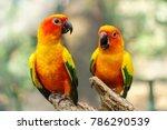 beautiful colorful sun conure... | Shutterstock . vector #786290539