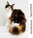cute kitten looks | Shutterstock . vector #786319999