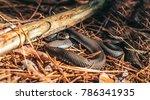 snake basking in the warm... | Shutterstock . vector #786341935