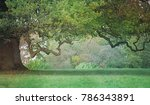 old craggy oak tree   misty... | Shutterstock . vector #786343891