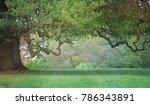 old craggy oak tree   misty... | Shutterstock . vector #786343891