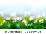 beautiful spring  background... | Shutterstock . vector #786349405