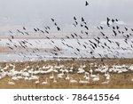 Spring Birds Migratory Bird