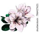 azalea flowers with leaves...   Shutterstock .eps vector #786427621