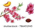 peach watercolor illustration.... | Shutterstock . vector #786451945