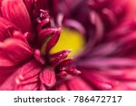 macro shot of violet flower... | Shutterstock . vector #786472717