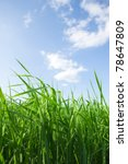 spring green grassland with tall grass - stock photo