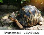 portrait of radiated tortoise... | Shutterstock . vector #786489829