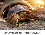 Stock photo cute baby african spurred tortoise sunbathe and resting on sand ground with his protective shell 786490234
