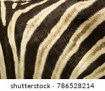 pattern and texture of leather...   Shutterstock . vector #786528214