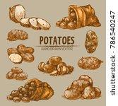 digital color vector detailed...   Shutterstock .eps vector #786540247
