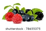 forest berries. photo realistic ... | Shutterstock .eps vector #78655375