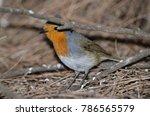 robin  erithacus rubecula... | Shutterstock . vector #786565579
