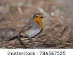 robin  erithacus rubecula... | Shutterstock . vector #786567535