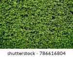 green leaves or bush wall... | Shutterstock . vector #786616804