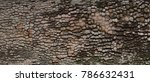 Old Tree Bark Background Or...