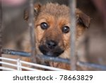 puppy locked in the cage | Shutterstock . vector #78663829