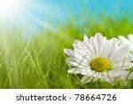 Nature background - beautiful flower on green field - stock photo