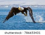 Bald Eagle Flying On Top Of...