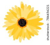 gerbera daisy isolated. vector... | Shutterstock .eps vector #786656221