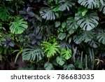 jungle plant wall | Shutterstock . vector #786683035