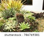 modern garden design   Shutterstock . vector #786769381