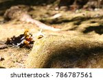 moss on stone in the forest | Shutterstock . vector #786787561