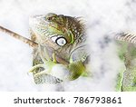 Macro Photography A Green Iguana - Fine Art prints