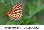 club silverline butterfly  | Shutterstock . vector #786800059