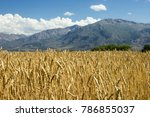 Gold Ripe Wheat Field With Sky...
