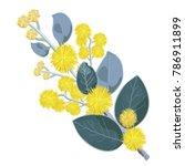 flowering australian wattle... | Shutterstock .eps vector #786911899