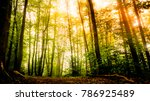 Scenic view of summer sun shining through leafy trees in forest