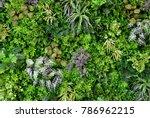 Wall Is Full Of Vegetation...
