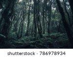 Beautiful Rain Forest At Natur...