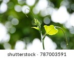 wet plant with blur bokeh... | Shutterstock . vector #787003591