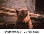 brown bear portrait. brown bear ... | Shutterstock . vector #787015801