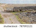 flock of sheep on desert...