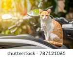 the cute white and brown cat is ... | Shutterstock . vector #787121065
