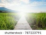 a bamboo walk to walk through... | Shutterstock . vector #787223791