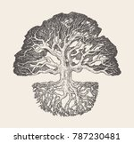 Stock vector high detailed illustration of an old oak tree with a root system hand drawn vector 787230481