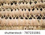Straw Wall  Background  Rice...